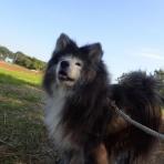 ムクムク秋田犬のblog