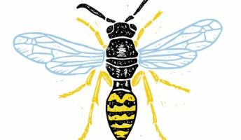 【悲報】ベランダにアシナガバチが巣作ってた