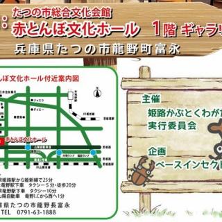 ノコノコ飼育記 (insectarium&姫路ベースインセクト)