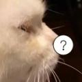 ネコが膝の上でウトウトしていた。ぷくぅ~ん♪ → 見事な「鼻ちょうちん」ができました…