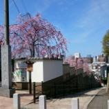 『まだまだあるよ 大阪の桜と歴史』の画像