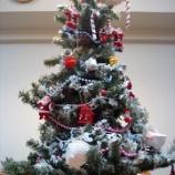 『クリスマス・ツリー🎄と空っちの近況』の画像