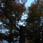 『里宮ネグラの消失』の画像