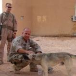 『分かち合いと求め合い:「海兵隊の規則を曲げた男」イラクの野犬ナブスの話』の画像