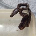 蛇の目 蛇の道  --janome janomichi--