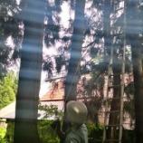 『家に倒れかかった木の対策依頼』の画像