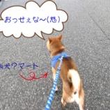 『富山市 あとりえティンカーベルの看板犬?柴犬のマート君のお散歩』の画像