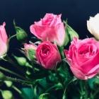 『The Rose Bette Midlerの歌が良いですので、翻訳にチャンレンジ!』の画像