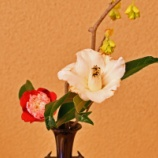 『ミニ茶会「ひな祭り」』の画像
