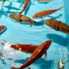 『新世界のつり吉の2号店がなんばにオープン 「ジャンボ釣船つり吉」生簀に囲まれた店内で自分で釣った魚をお料理して貰えます!』の画像