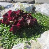 『紫×緑』の画像