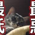 最低最悪の将棋プレミアム生中継 二度と課金しません!!!(怒)