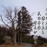 『フォト短歌「二本の大槻」』の画像