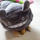 『我が家にトトロが現れた!』の画像