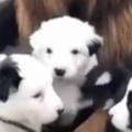 子イヌたちはそばを離れない。ママの代わりに子守だワン! → ベビーシッター犬はこんな感じ…