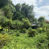 『【横浜・戸塚校】初夏の北鎌倉』の画像
