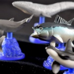 「クロマグロ」さんがフィギュアになってガチャに登場!「クロマグロと海洋生物」