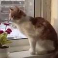 ネコが「窓辺」の隅にいた。反対側にも猫がいる → 軽やかです…
