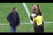 近所の飼い熊のお世話をしていた男性が襲われて意識不明の重体・取手