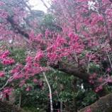 『梅も残すところ』の画像