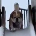 イヌと雪の積もる「公園」にやってきた。滑り台で遊んでみる → こうなります…