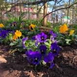 『【朝のご挨拶】BZ花壇でお話を伺い、私たちの戸田市は見えないところで多くの方の善意、そしてボランティア活動に支えられていることを改めて思いました。』の画像