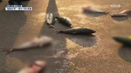 【韓国】日本産のせいで苦しい養殖業者、生きた日本産の魚をソウルの路上に放り投げるデモwwwww