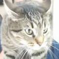 【ネコ】 生配信中にうちの猫を紹介してみた → こうなった…