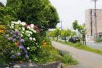 JR河内磐船駅近く。季節の花が咲く、森北1丁目~交野まちなみ日記No.65~