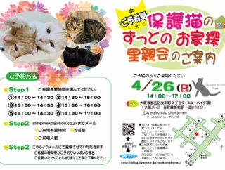 4月26日 日曜日『ご予約制 保護猫のずっとのお家探し里親会』を開催いたします。