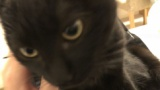 うちの猫、触ろうとすると逃げてくゴミ猫なんだけど