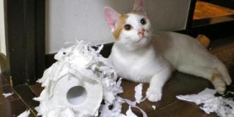 同棲相手の飼い猫の食い意地がすごい。人のご飯まで食べようとするわで嫌いすぎて辛い…