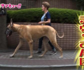 【富山】飼い犬にかまれ乳児死亡