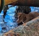 沖合い220kmで犬を保護