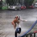 【イヌ】 今日は朝から土砂降りの雨が降っていた。ヒャッハー♪ → 通りで犬はこうなった…