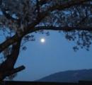 おまえら月がきれいだぞ。