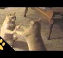にゃんと!?同じ動きをする二匹の猫 何が楽しいんだこれ