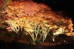 私市植物園で『紅葉のライトアップ』イベントがある!~11/21からの三連休は植物園がおススメ!~
