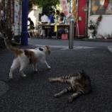 『代田橋 沖縄タウン #2』の画像