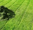 刈ったばかりの芝生から出るガスは腐乱死体から出る臭いと同じ成分だと判明
