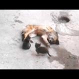 『 母猫が旧友の犬に会いにやって来た…子猫を連れて』の画像