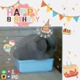 『そら☆Birtday~8歳の誕生日🎂』の画像