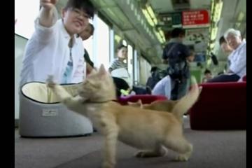 """海外「日本人らしい優しさ」野良猫のケア方法について学ぶ""""ネコ列車""""が話題に"""