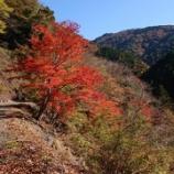 『秋深まってきましたよ』の画像