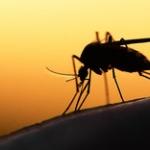 高校生が妹の協力で「蚊」の習性の一つを発見!意外な方法で刺される回数を激減させることに成功!