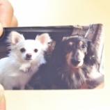 『iPhone/iPadからPrime Printを使ってSELPHY CP910へ印刷する』の画像