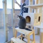 愛猫たちとの徒然日記 梅子の部屋