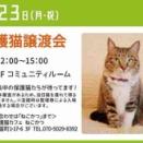 保護猫譲渡会、9月23日(月・祝)にララガーデン川口で開催。一階コミュニティルームで12時から15時まで。可愛らしいネコちゃんを家族にお迎えできる機会!どうぞご参加ください。