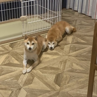 ケセラセラ 岡山 ~保護犬からまだ見ぬ里親様へ~
