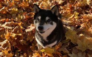 スウェーデンは「秋真っ盛り」